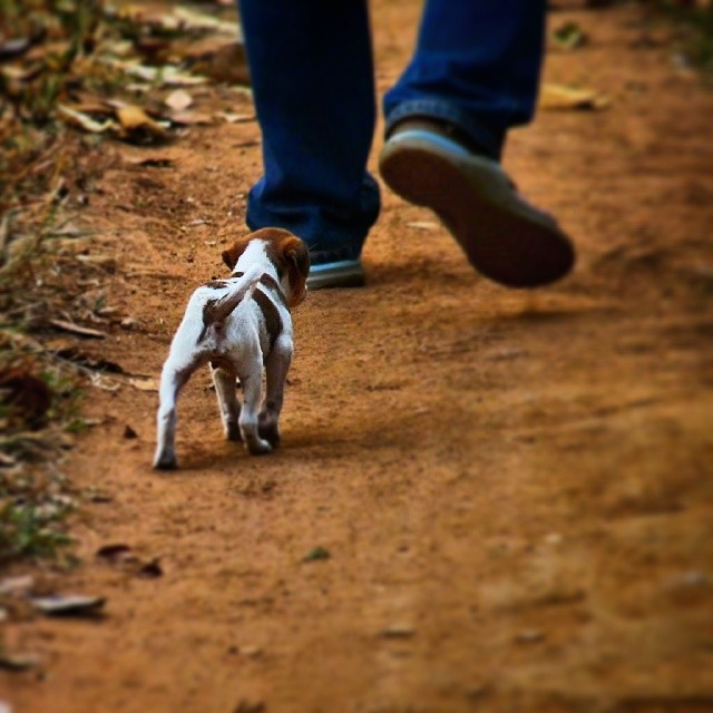 Walking in your footsteps #dogs #dogsofinstagram #puppies