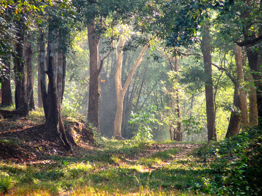 A forest path in Parambikulam