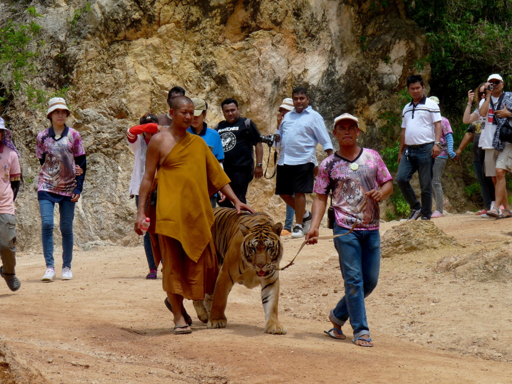travel-th-tigertemple-00013