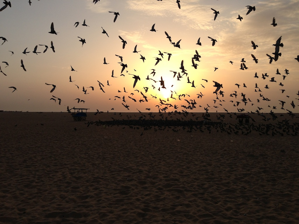 Pigeons scatter the dawn at Chennai's Marina Beach