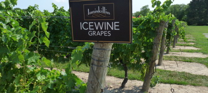 Must-have icewine at Niagara-on-the-Lake