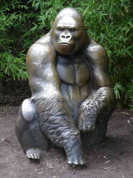 Outside the gorilla exhibit at Melbourne Zoo. Harambe, who died May 28, was a similar species